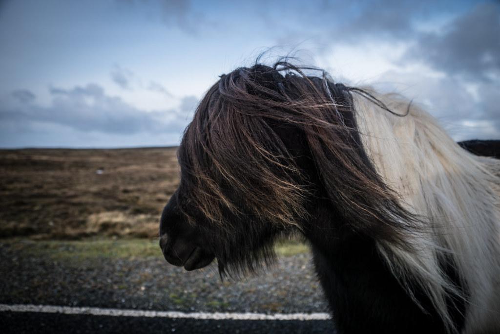 Shetland-15