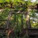 enter the green by LichtGespiele