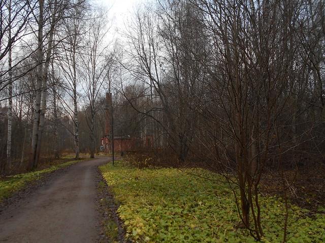 Ruskaantuvaa pohjansinivalvattia (Cicerbita alpina), 7.11.2015 Hämeenlinna Varikonniemi
