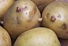 Kartoffelaugen by Karpaun