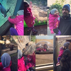 We had a great time at the zoo! #oregonzoo