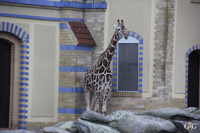 Besuch im Berliner Zoo 06.12.2015109