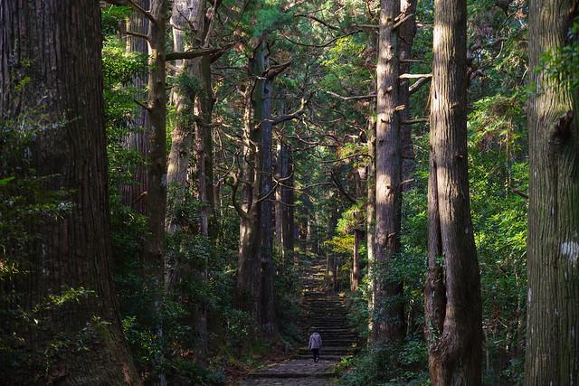 熊野古道の雰囲気でしょうか・・・大門坂