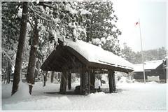 日本北海道.札幌_北海道神宮.20