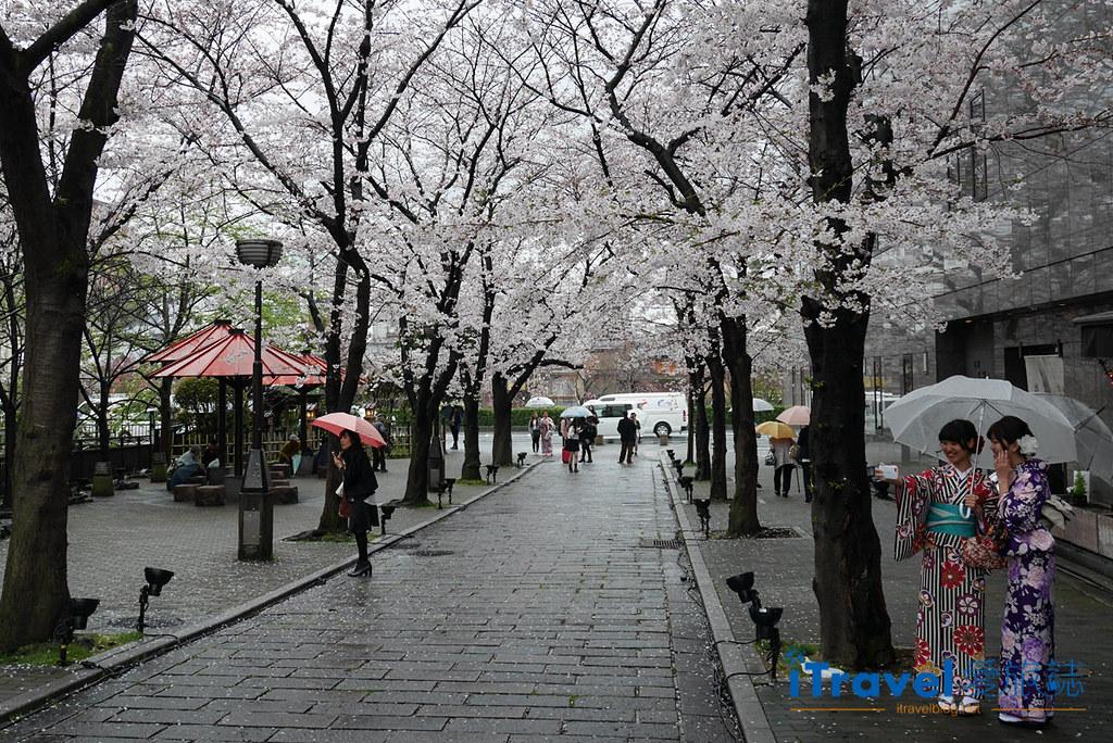 《京都賞櫻景點》二訪祇園白川賞吉野櫻花盛開,順遊行程心得分享。