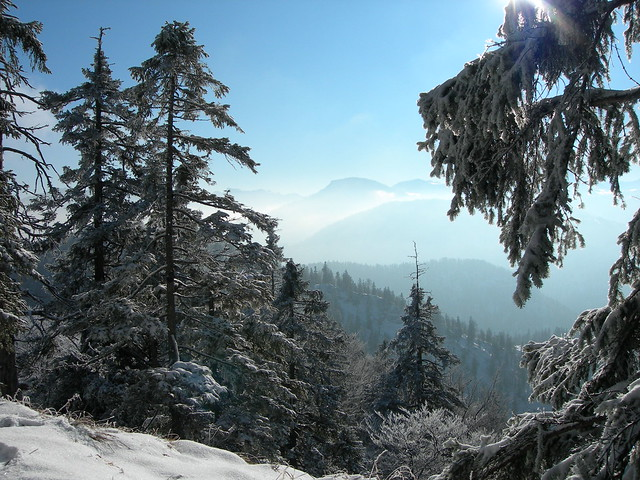 Bergwald im Winter, Nikon E7900