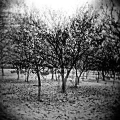 Orchard, Berrien County, MI