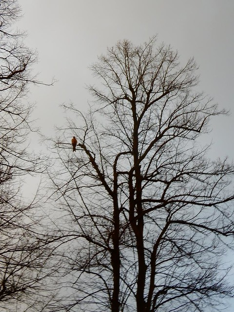 Kite in a tree
