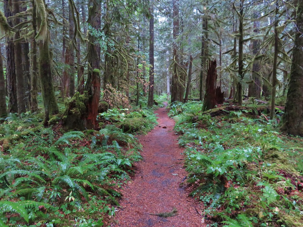 Salmon River Trail in the Salmon-Huckleberry Wilderness