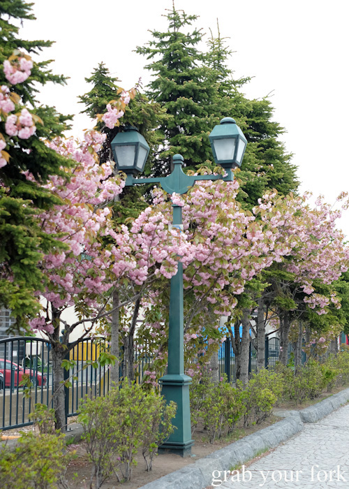 Blossoms and street lamps in Otaru, Hokkaido