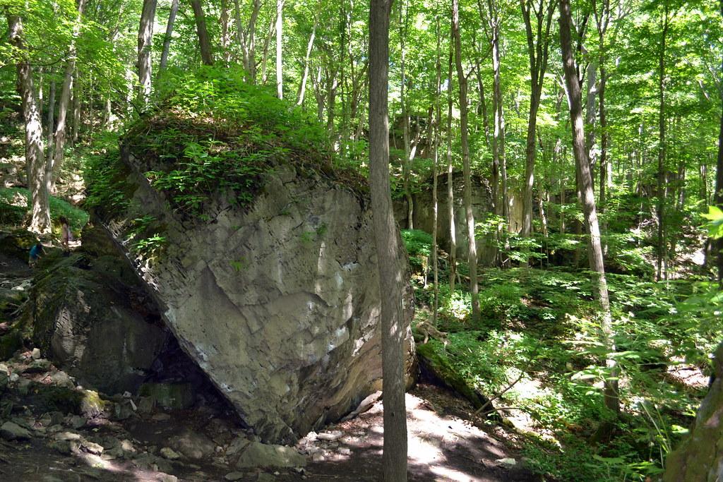 Niagara Glen - Forest (24)