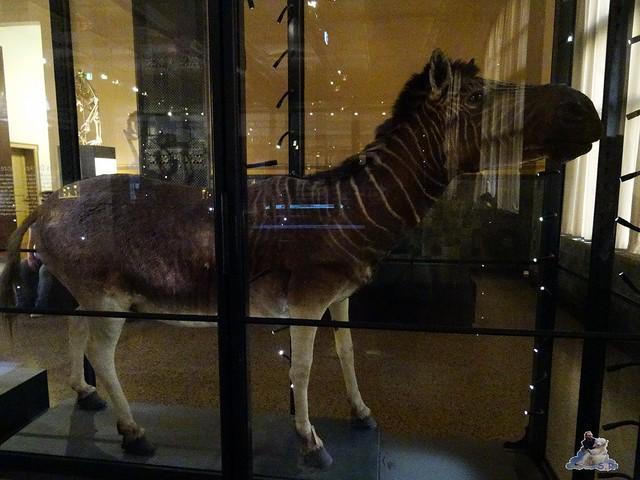 Naturkunde Museum Berlin 17.07.2015  081