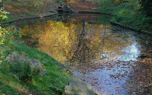 Le lac doré - The golden lake