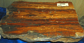 Sandstone with fault slickenside (Lakota Sandstone, Lower Cretaceous; Rapid City, South Dakota, USA) 1