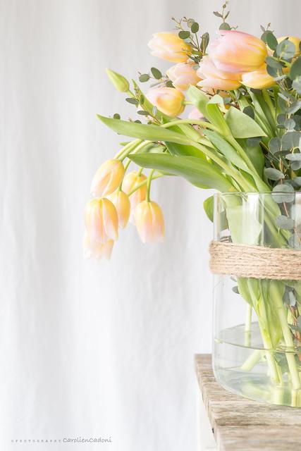 Tulips Tom Pouce