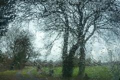 """""""Ô bruit doux de la pluie Par terre et sur les toits !  Pour un coeur qui s'ennuie ̂ Ô le chant de la pluie""""...  Paul Verlaine"""