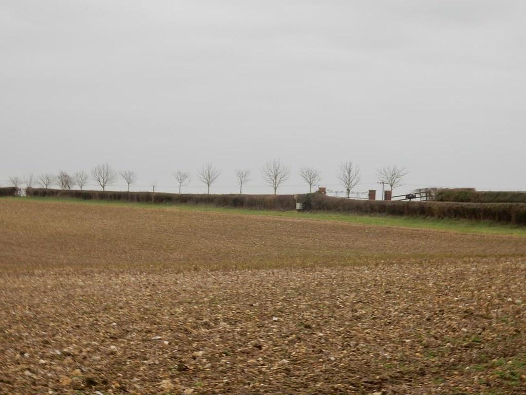Line of trees Chorleywood to Chesham