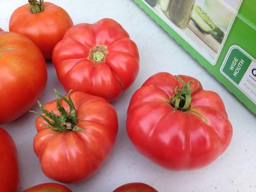 Beautiful Mortgage Lifter tomatoes.