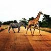 Mein Zebralook #DeinSuedafrika #zebralook #gewinnspiel