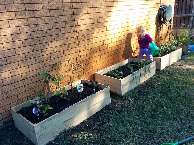 How to Build Inexpensive Garden Boxes From Fence Palings