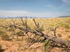 Ghost Ranch by wildabyss