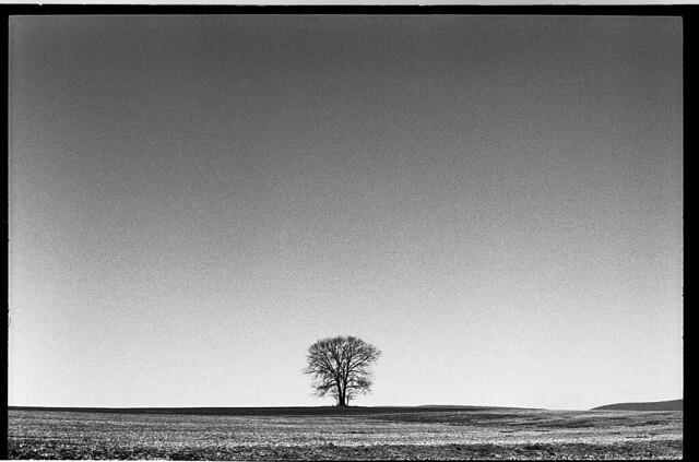 © 2015 Johnny Martyr LeicaTriXSummaritLonesomeTree150_edited-1 Frederick Maryland Film Photographer