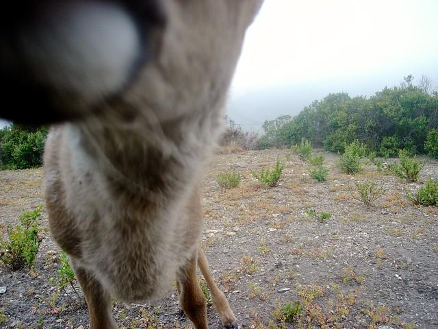 fawn kiss