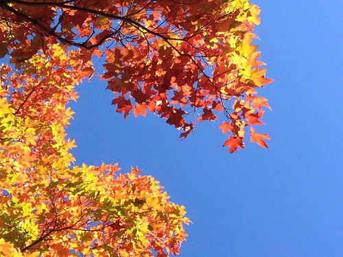 trees topf25 leaves vibrant fallcolors maryland brightcolors 4autumn iphone owingsmills garrisonforest baltimoreco cmwdblue