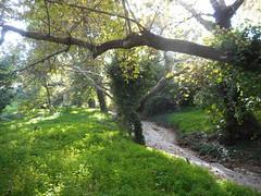 Μια «μικρή άνοιξη» μέσα στο φετινό φθινόπωρο