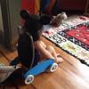 Mouse racer. 1,080d