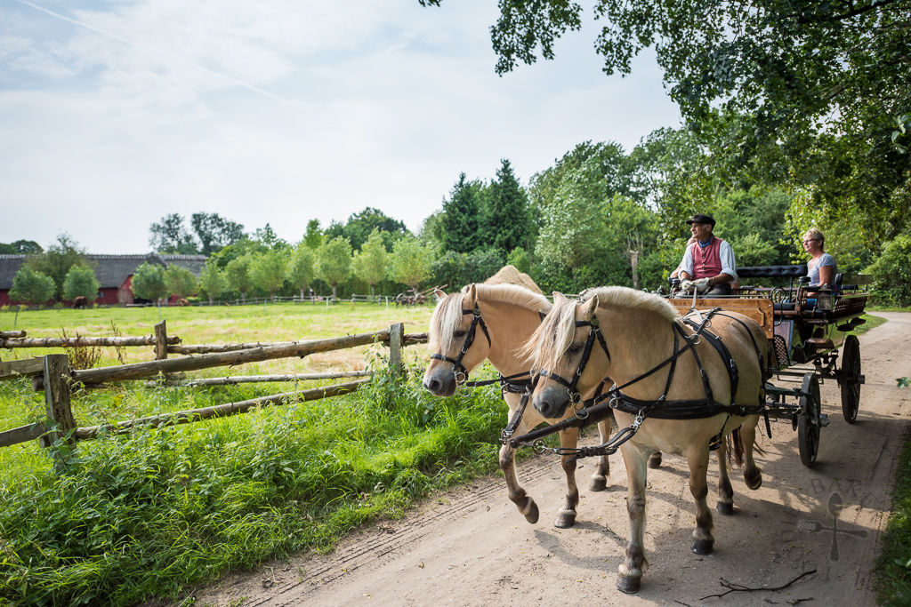 Horse-carriage ride
