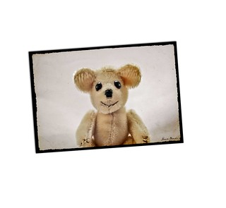 Black eyed Teddy A10
