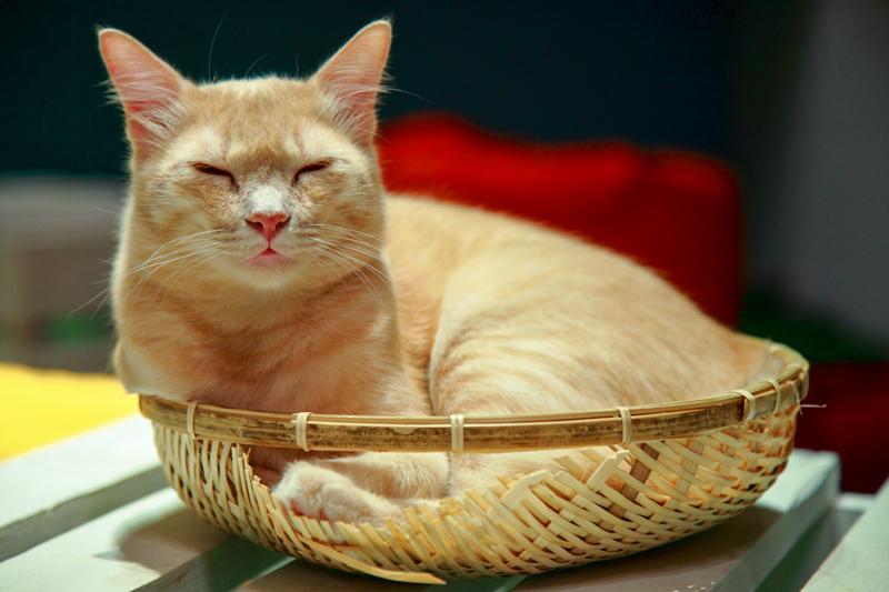 TTDI Purradise Cat Cafe Sleeping in Basket