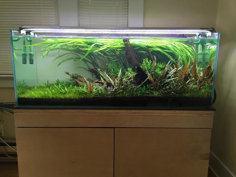 65 gallon se asian nine the planted tank forum