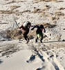 Dune Races