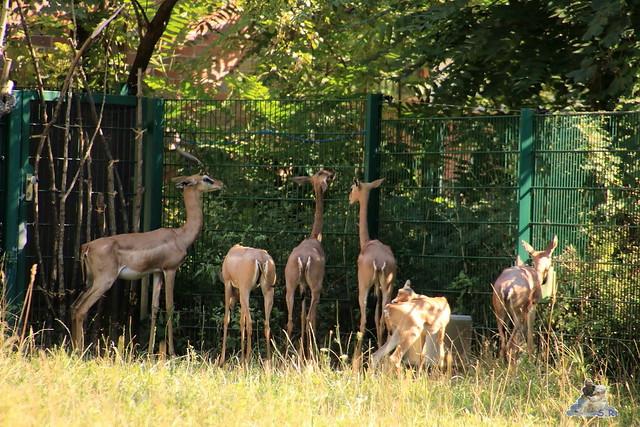 Tierpark Berlin 30.08.2015  0151