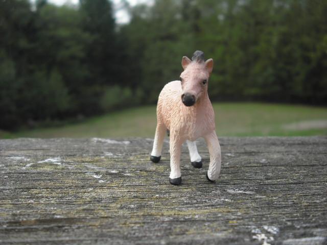 Shetland Pony Mare and Foal 21203286749_f048c56db4_z