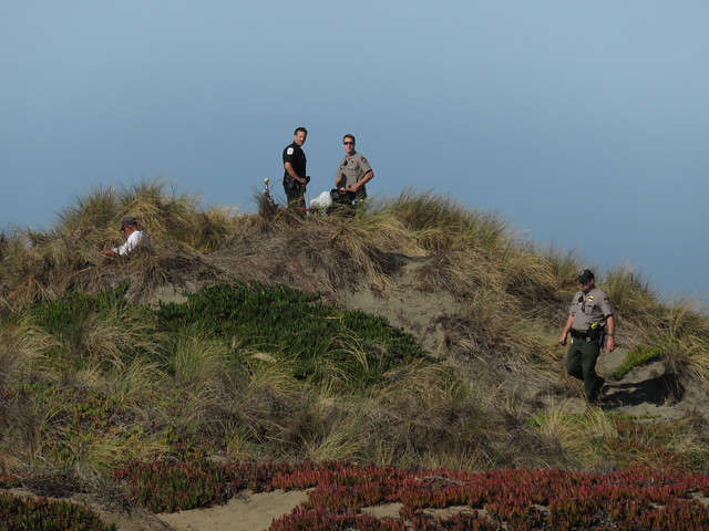 SF Parks and Rec, police on the sand dunes of Ocean Beach near homeless man reading the paper (I'm not really sure what's going on here) , San Francisco (2015)