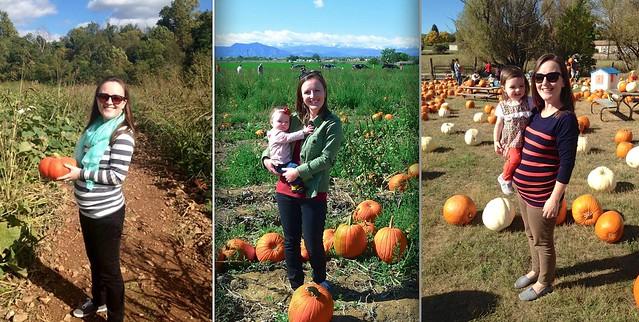 Pumpkins 2013-15