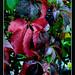 Autumn colours - 13 by cienne45