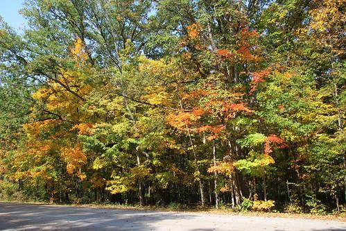 IMG_6502_Fall_Foliage