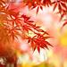 Autumn Colours 秋色 (#7 on Explore Nov. 19, 2015) by lfeng1014