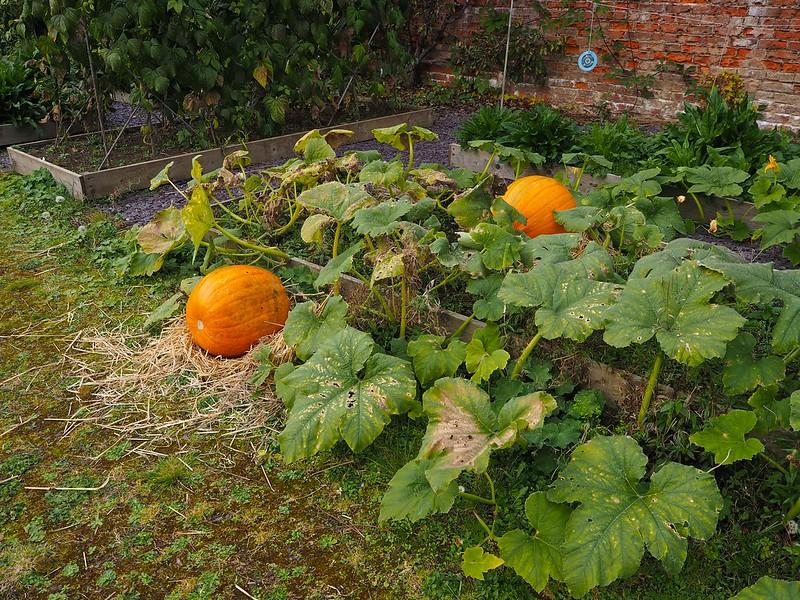 pumpkinpatch, thebyreatinchyraestate,
