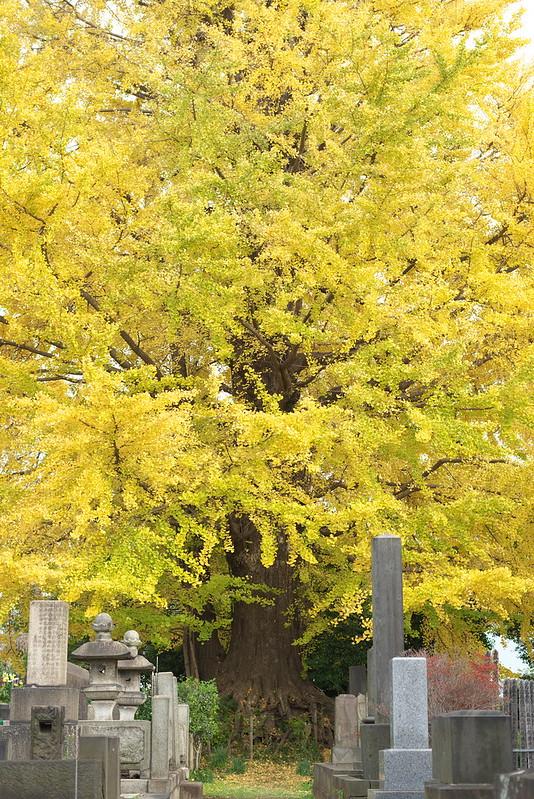 東京路地裏散歩 2015年11月29日