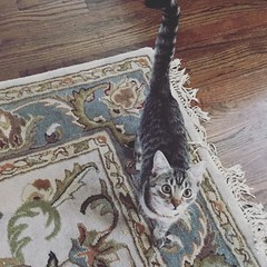There is a kitty in the house! #dallas#texas#cat#tabby#kitten#feline#catsofinstagram#instadaily#instacool#instagood#instalike#instamood#instapet#instacat#instapic#instadaily#instasize#instalove#instaphoto#cute#animals#animal#tx#holidays#pets