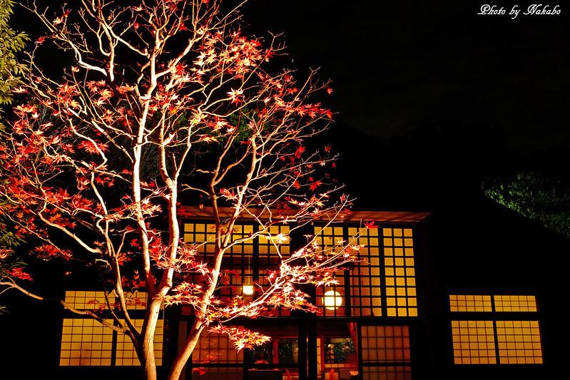 紅葉とたてもののライトアップ2015 by Nakabo