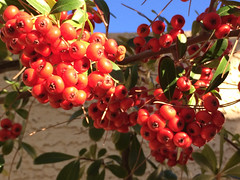 November plants