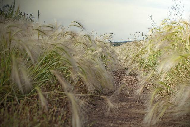 Grass color 20d_2527
