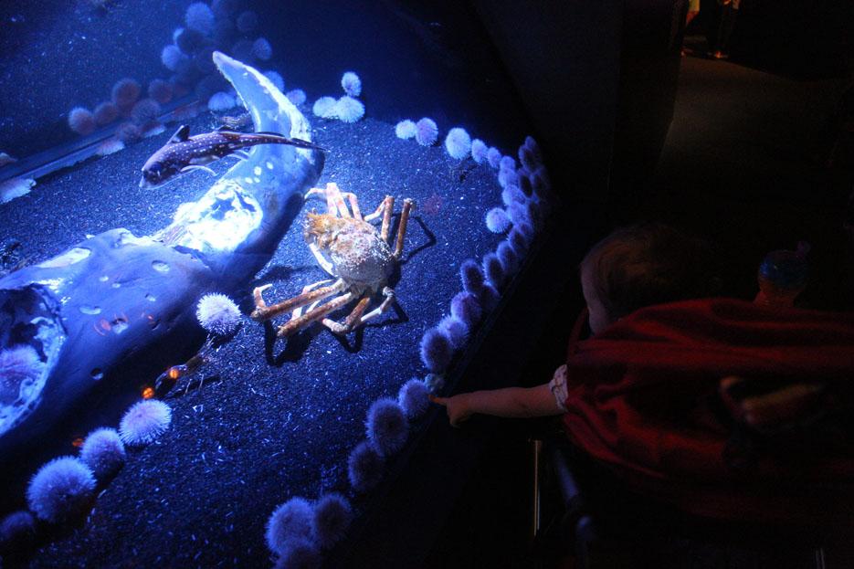 070915_aquarium07
