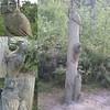 Seen on woodland walk